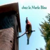 Chez mon Merle Bleu