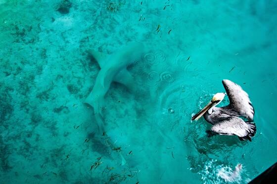 David Caldwell, Dry Tortugas National Park
