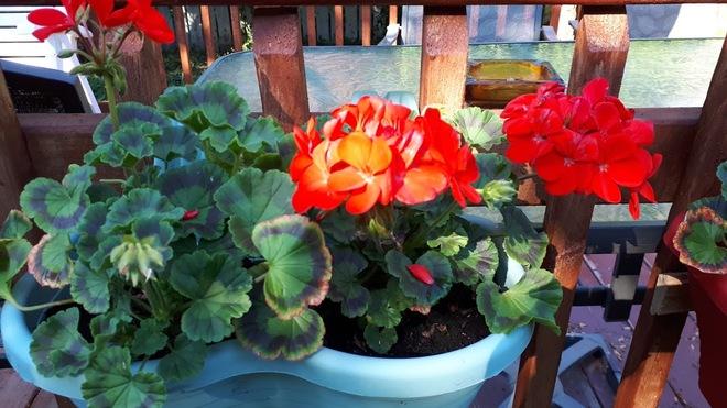 My garden........... Cap St-Jacques, Boulevard Gouin Ouest, Pierrefonds, QC