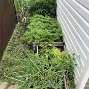 Mini jardin grosse récolte