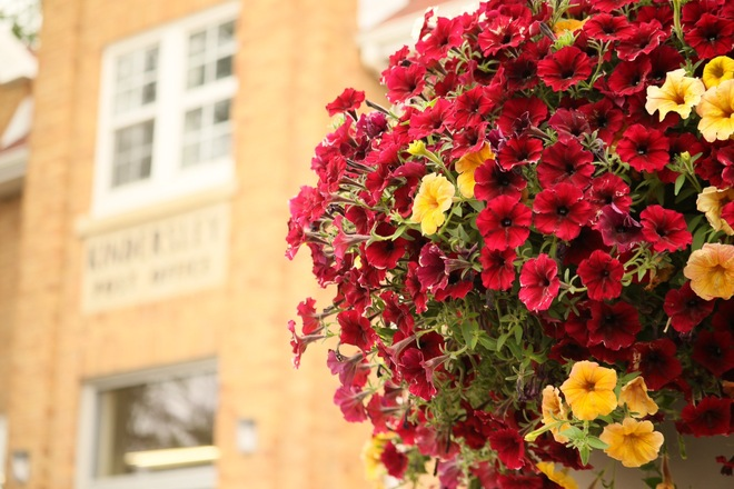 Summer Flowers Kindersley, SK