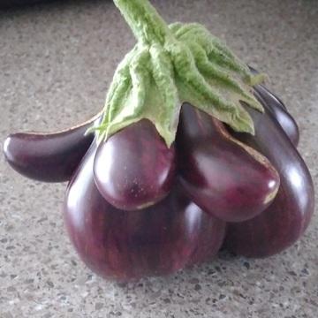 Une autre aubergine mutante!