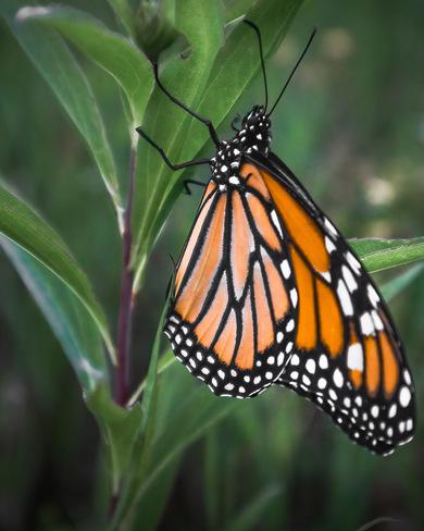 Beautiful Monarch 277 Beach Rd, Gilford, ON L0L 1R0, Canada