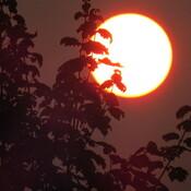 Hazy Sun.