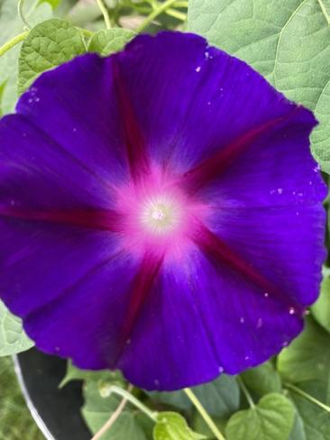 Vibrant colors Coquitlam, British Columbia, CA