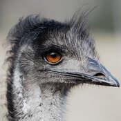 The Heron Stalker