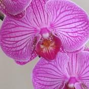 Orchidée superbe!