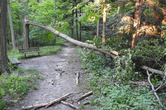 Aftermath of a recent storm Northumberland County, ON