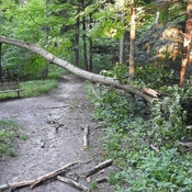Aftermath of a recent storm