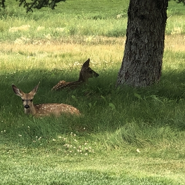 Two cuties relaxing in the shade on this hot afternoon on the golf course!