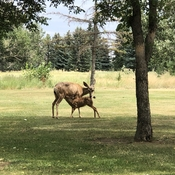 Snack time on the golf course!