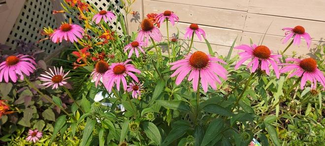 Summer Bloom LaSalle, ON