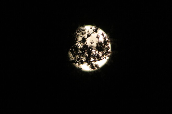 July Full Moon Lively, Greater Sudbury, ON