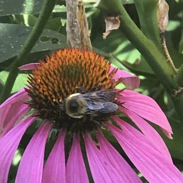 Flower Garden visit