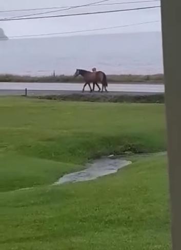 Morning walk, after a nights rain Mainland, NL