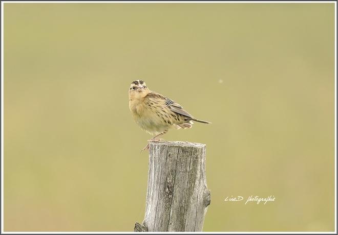 oiseau Beauceville, QC