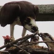 Feeding Time! (part 3)