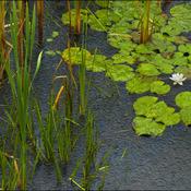A wet day, Elliot Lake.
