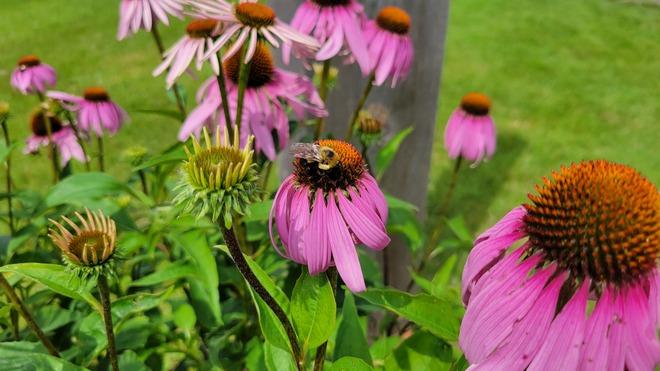 flower buzz Morrisburg, ON
