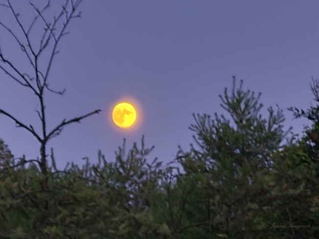 Full moon, almost, July 15, 2021 Tiny, ON
