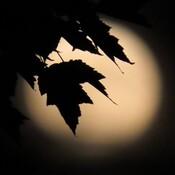 Belle Lune de Juillet.