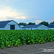 Norfolk County and Elgin County Tobacco