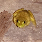 Tree frog in the basement.
