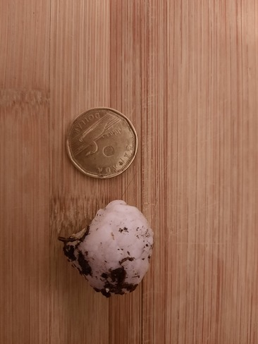 looney-sized hail North Red Deer, AB