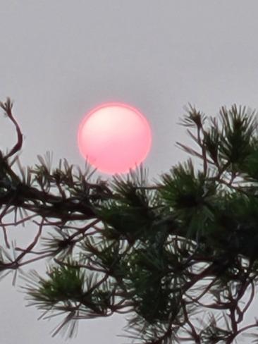 Pink Sun Ottawa, ON