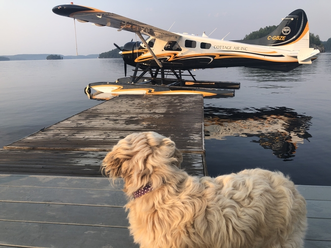 Fun and excitement at Port Sydney town dock! Featuring: Sydney the Cavapoo ❤️ Port Sydney, Ontario, CA