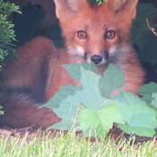Surprise Backyard Visitor