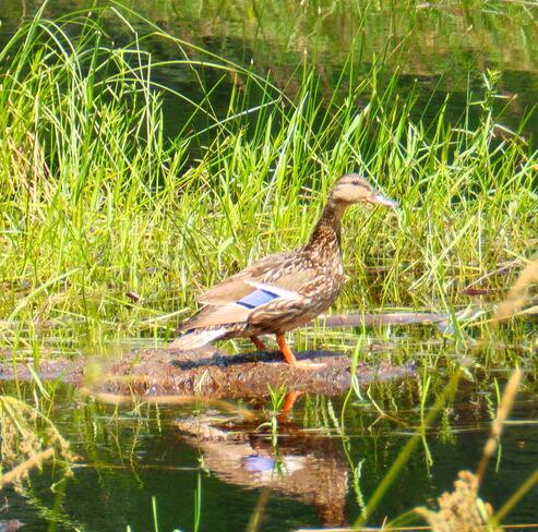 Wildlife Thunder Bay, ON
