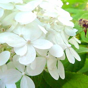 Bee to the Blossom