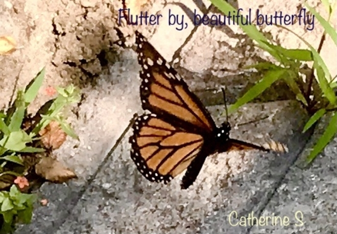 Flutter by, Beautiful Butterfly:) Toronto, Ontario, CA