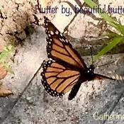 Flutter by, Beautiful Butterfly:)