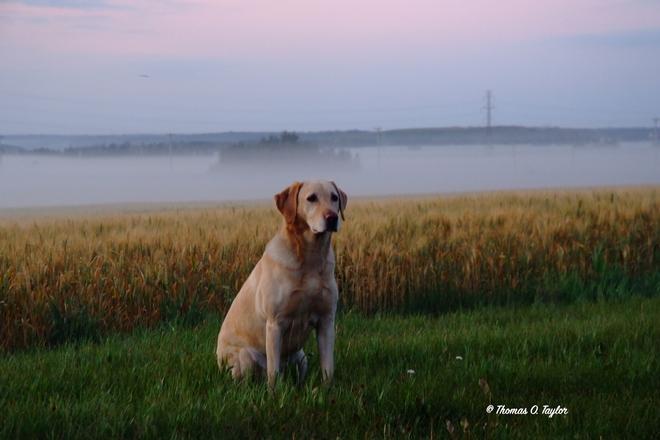 Morning Ground Fog Leduc, AB