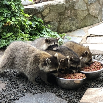 Supper time