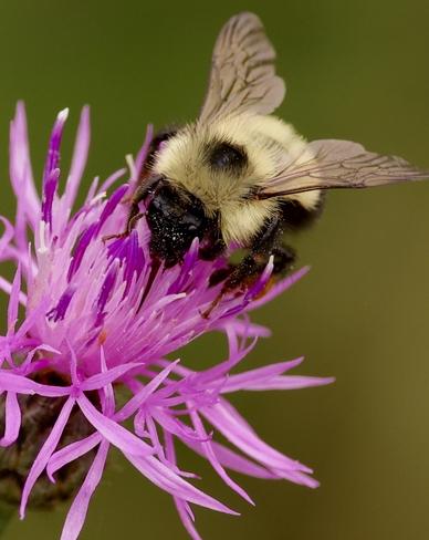 Bee Desbarats, Ontario, CA