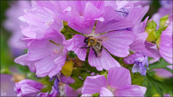 Bee, Elliot Lake. Elliot Lake, ON