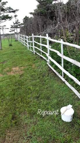 Painting fence on the farm Mainland, NL