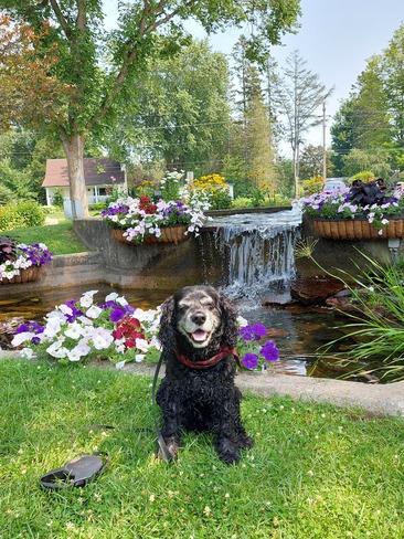 Bellevue Park Poser Sault Ste. Marie, ON