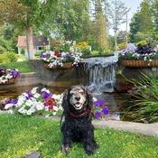 Bellevue Park Poser