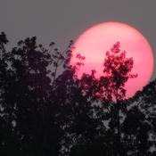 REDDISH SUN setting