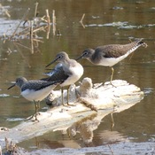 SPOTTED ON PARTLY-SUBMERGED LOG!!!