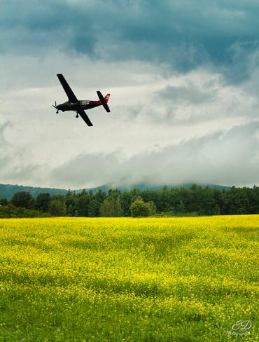 Fleur jaune et avion noir Bromont, QC