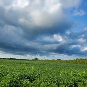huge cloud over Harrow Ontario