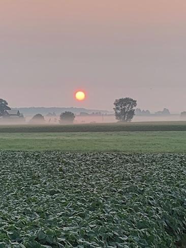Sunrise and mist Paisley, ON