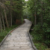 WALKING TRAILS at PIGEON RIVER