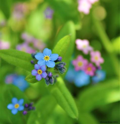 Pretty Flowers in Formosa Formosa, ON