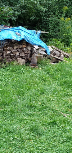 Groundhog has turned his back on the visiting skunks Pointe-Claire, QC